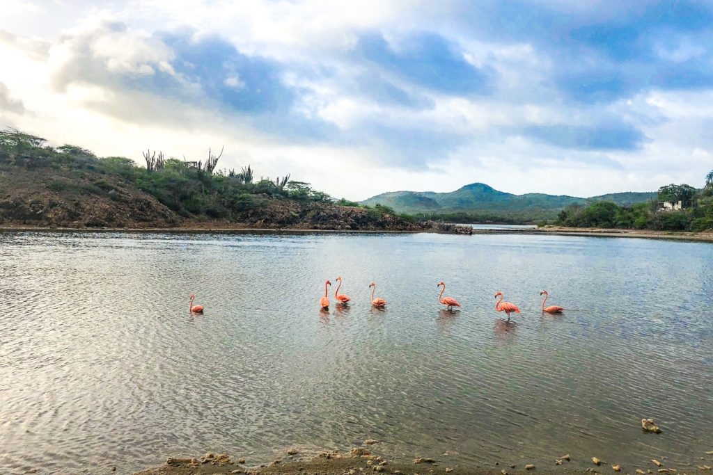 Flamingos at Lake Goto