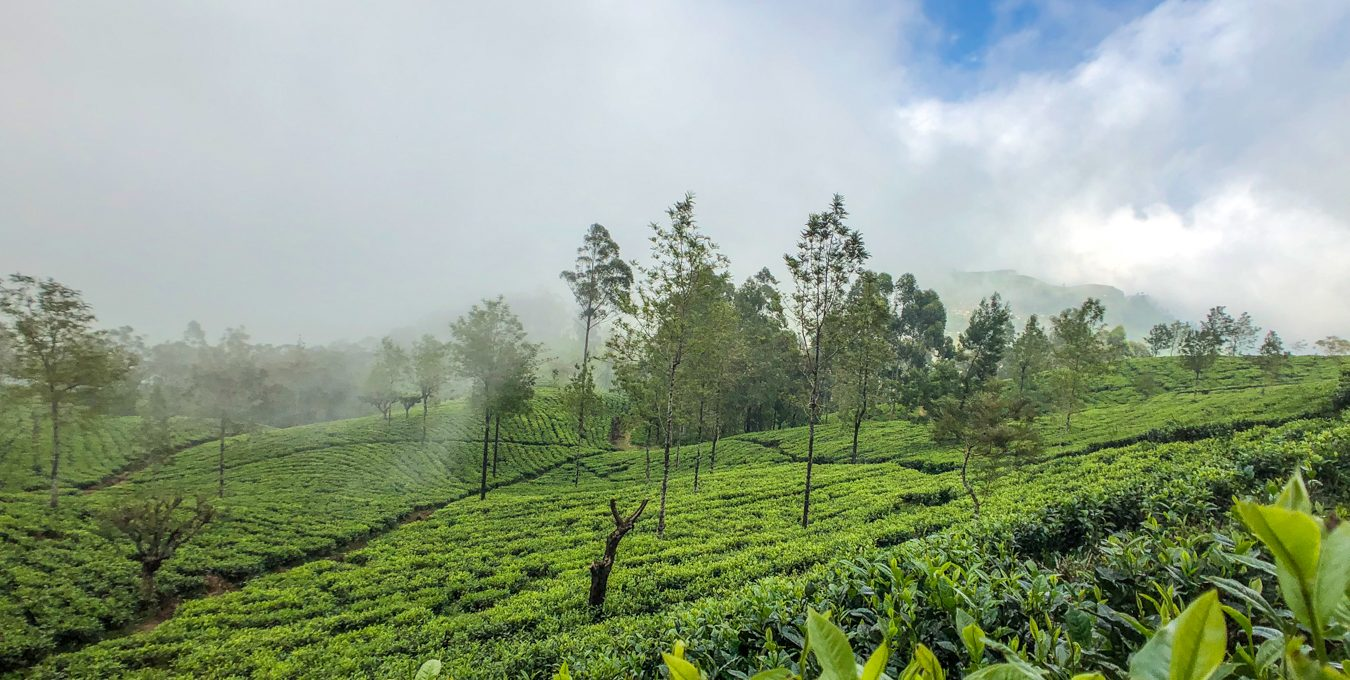 Road trip through Sri Lanka – The Tea Country