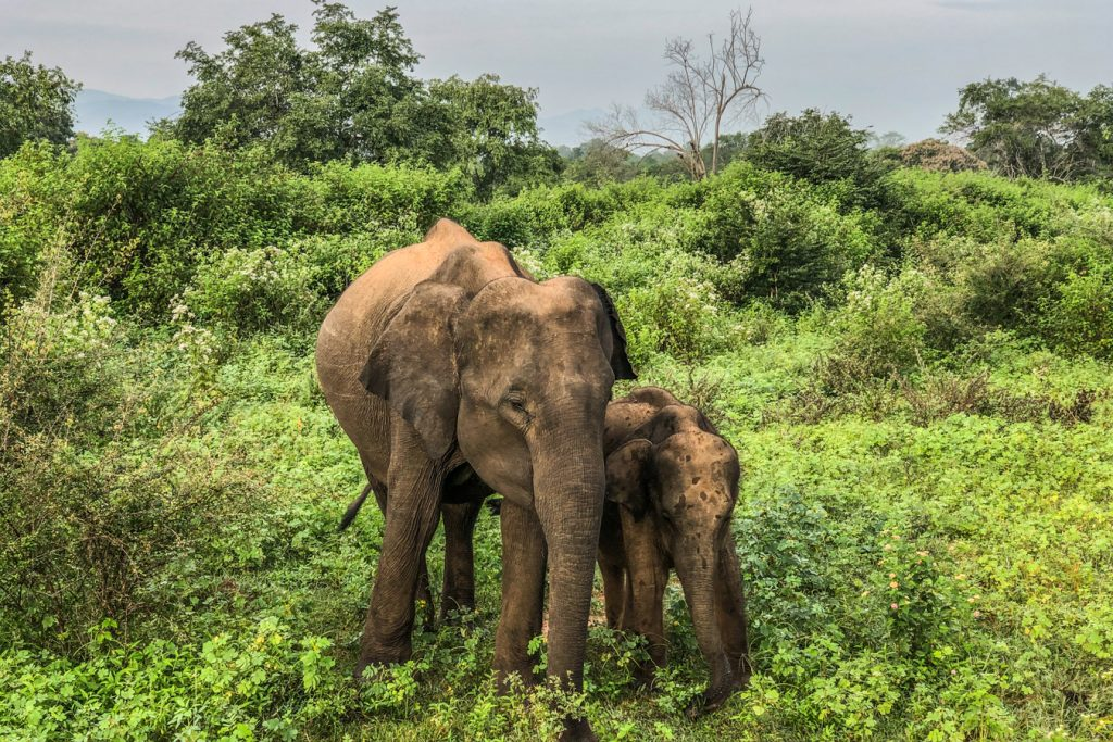 Sri Lanka safari with kids