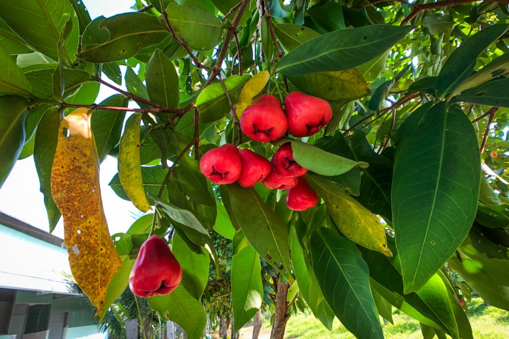 Tropical fruits in Mekong Delta