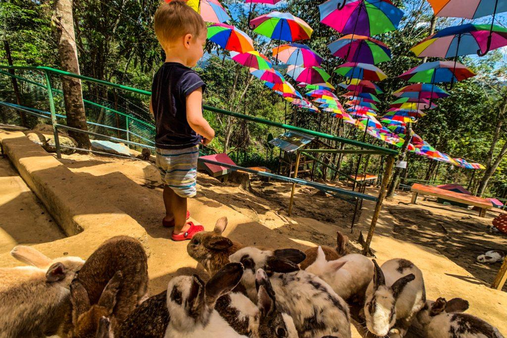 Rabbit farm kinabalu park
