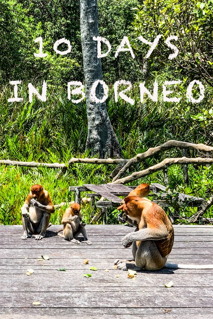 10 days in borneo
